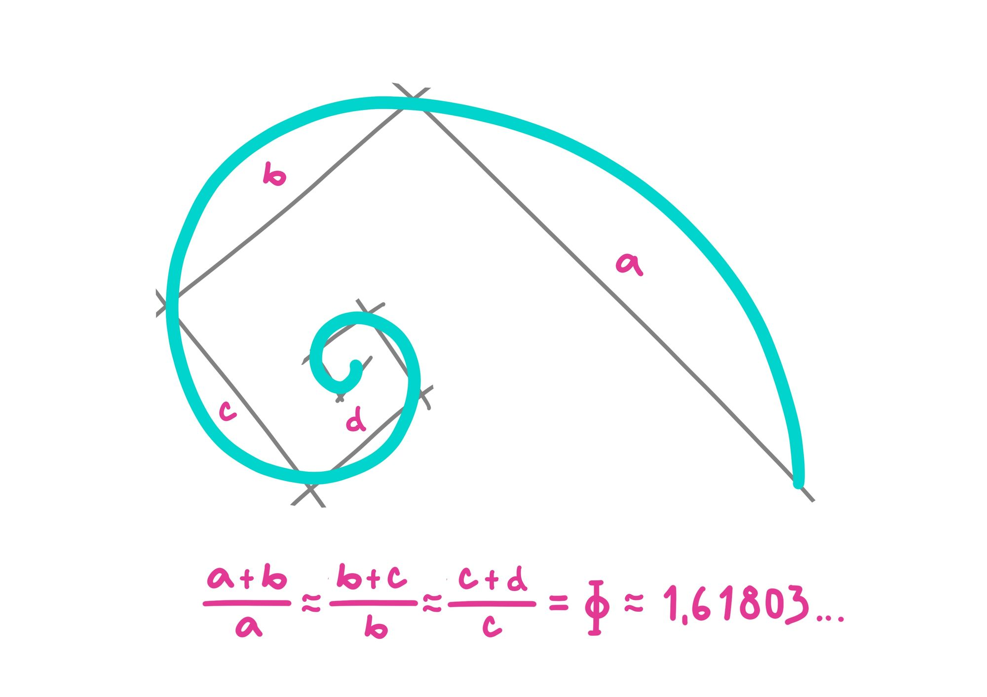 Fibonacci sequence, spiral and Phi - the golden ratio